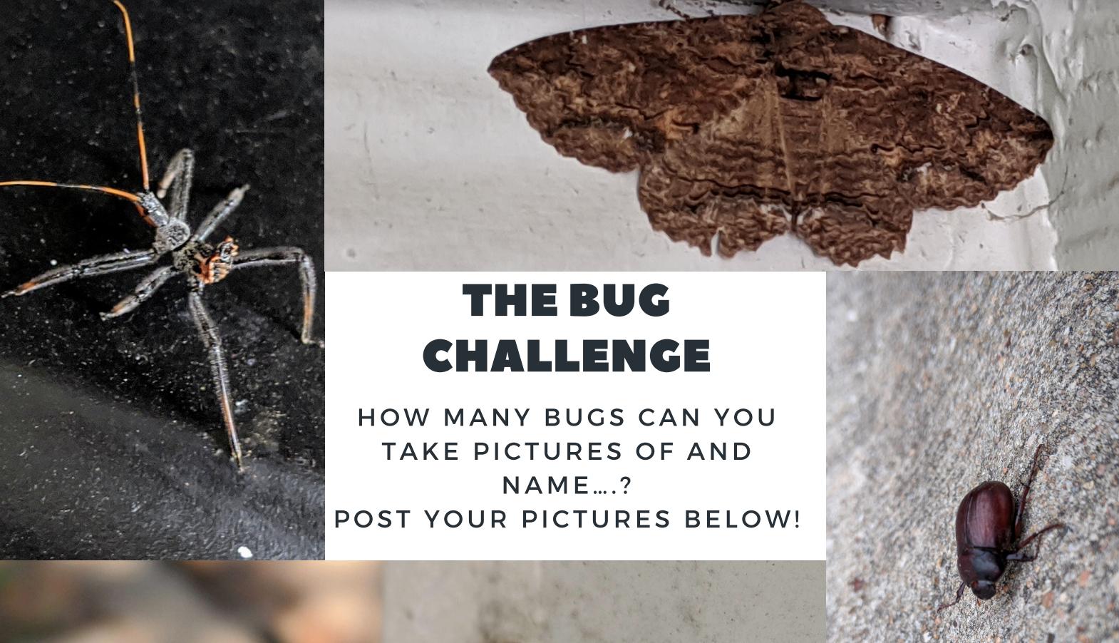 The Bug Challenge
